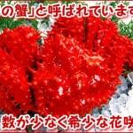 2016年7月 根室 花咲蟹の漁と販売が解禁されました。